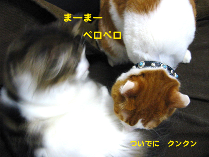 IMG_200842099.jpg