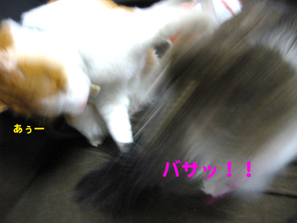IMG_201342099.jpg