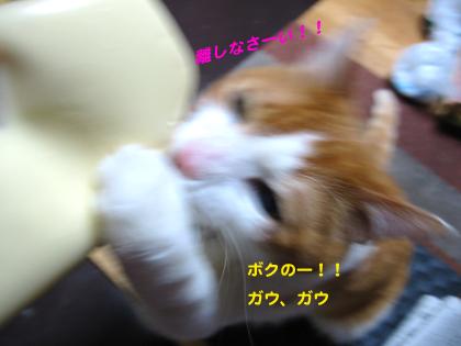 IMG_2106999.jpg