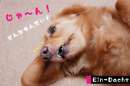 Ein-Dacsh2_20080608.jpg