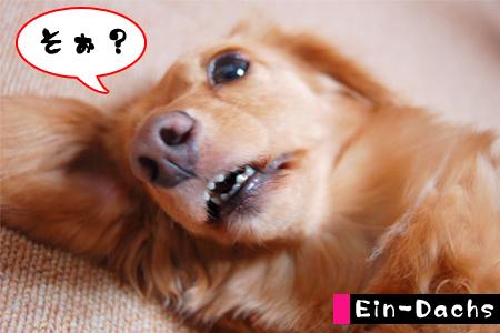 Ein-Dacsh3_20080608.jpg