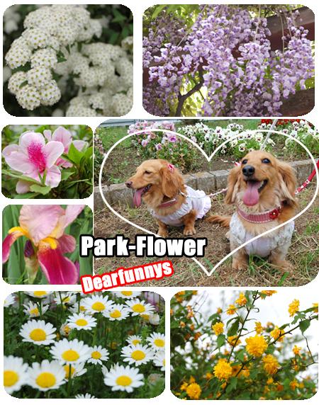 M_park-Flower2_20080506.jpg