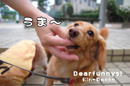 a-walkE_20080726.jpg