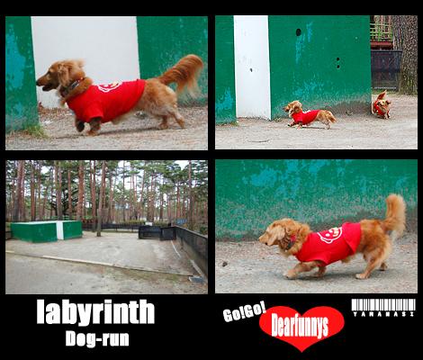 dog-run2_20080419.jpg