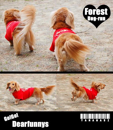 dog-run_20080419.jpg