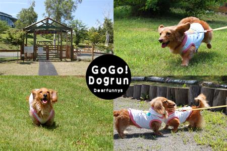 dogrun1_20080802.jpg
