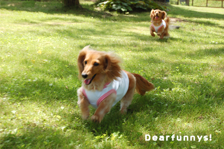 dogrun4_20080802.jpg