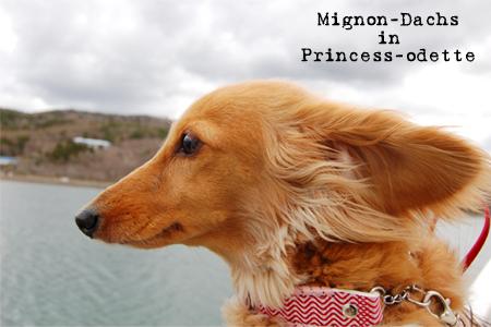 mignon_princess-odette_2008.jpg
