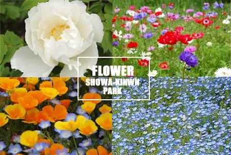 park-2flower_20080513.jpg