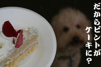 ケーキおいらピントが
