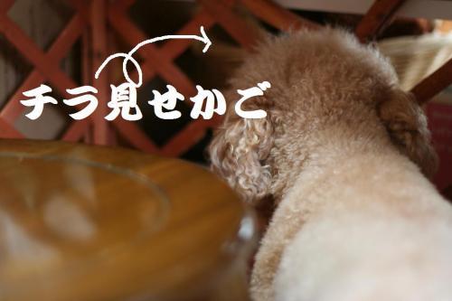 去勢 (12)