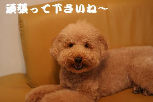 去勢 (54)
