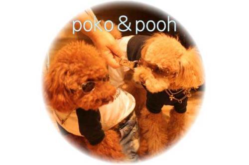ぷー&ポコ君
