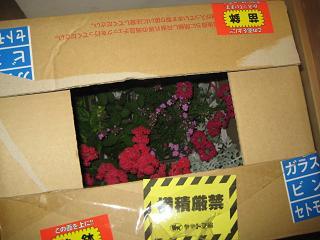0528お花が届いた