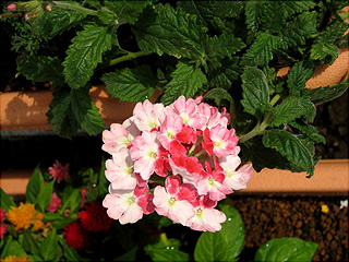 0705花まつり