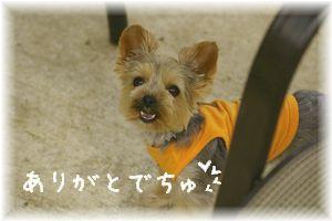 IMGP5687ブログ
