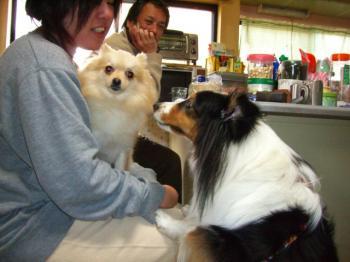 ユキちゃんに興味を示すリンちゃん!
