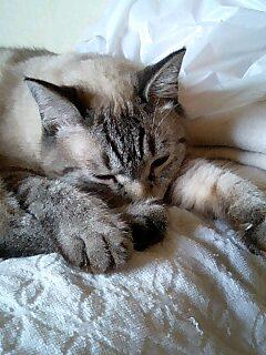 おやすみなさぁぃZZzzz・・・