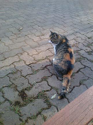2008.4.3 猫