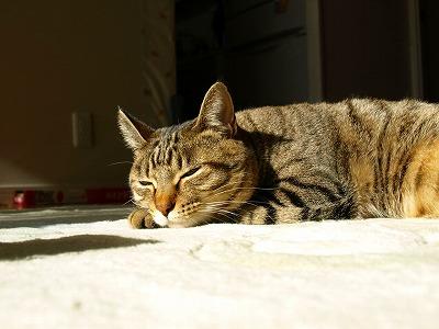 みーちゃん午後の惰眠