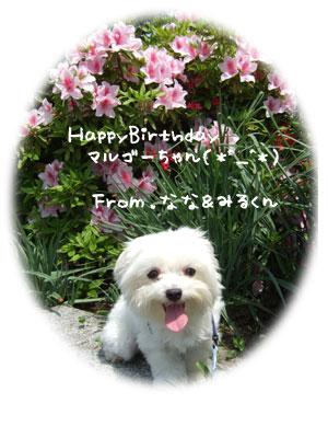 HappyBirthdayマルゴーちゃん♪