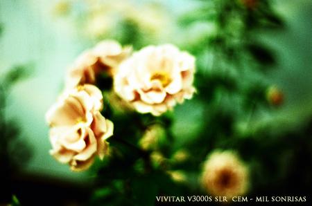 vivitarv3000s023.jpg