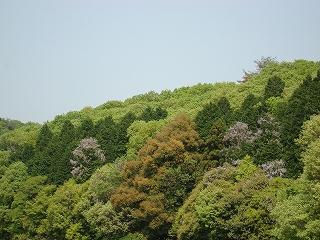 新緑の美しい季節になりました。