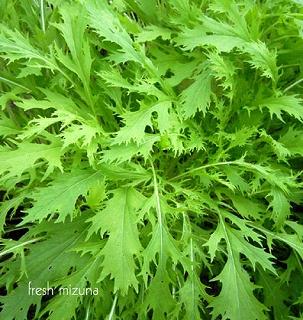 「 水菜 」 京都が原産地で、京菜とも呼ばれています。