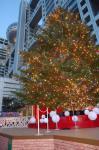 フジテレビのクリスマスツリー