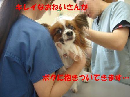予防接種デー9