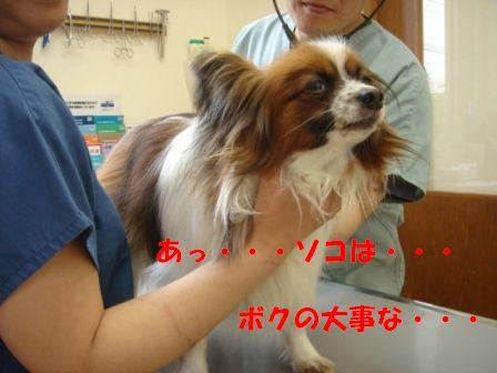 予防接種デー10