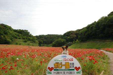 くりはま花の国1