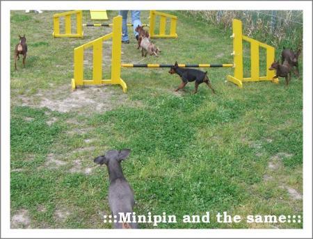 みんなジャンプ。