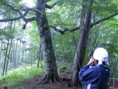 ◆ボブが林の写真