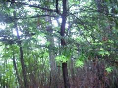 ◆林の木々