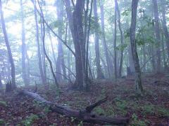 けむる森3