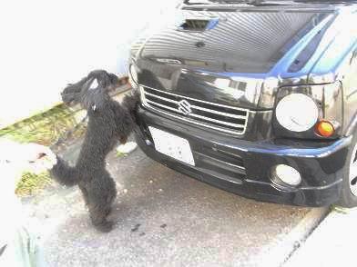 車に乗ろうと必死なWILL