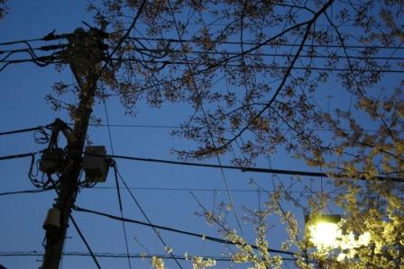 花と電線1