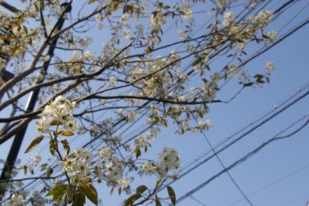 花と電線2