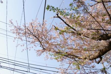 花と電線3