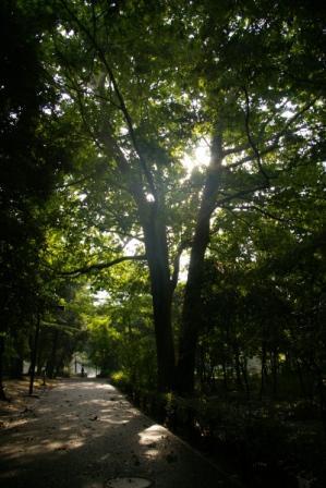 都会の中の森