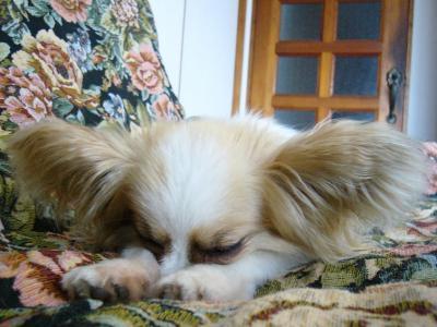 眠りアリス