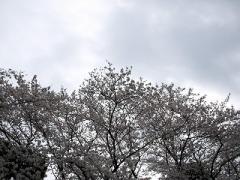 P3304015.jpg