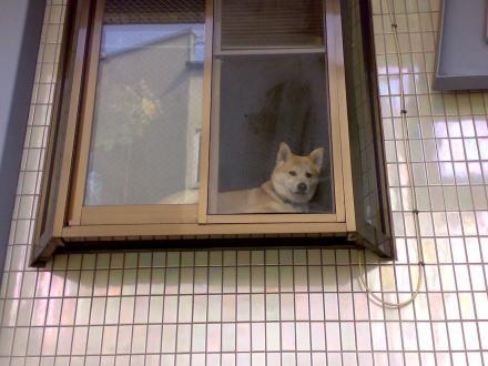 窓辺のわんこ
