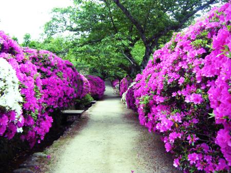 長岳寺へ続く道