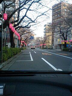 080325_0612~0001中野通り2分咲き1