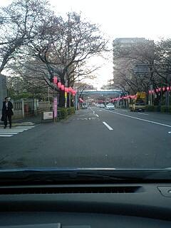 080325_0613~0001中野通り2分咲き2