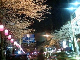 080327_0140~0001中野通り夜桜八分咲き1