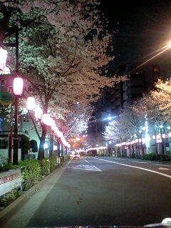 080327_0141~0001中野通り夜桜八分咲き2