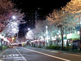 080328_0408~0001中野通り4